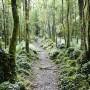 Dromore Woods