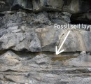 fossil soil layer