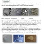 Geology-Sheet-18-Fossils
